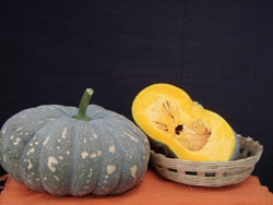 Aadi/आदि Winter Squash (Pumpkin) (Known You Seeds) - Farmers Stop
