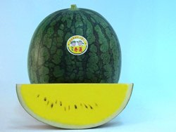 Anmol/अनमोल Hybrid Watermelon Yellow Flesh (Known You Seeds) - Farmers Stop