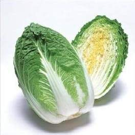 Apollo/अपोलो F1 Chinese Cabbage (Takii Seeds) - Farmers Stop