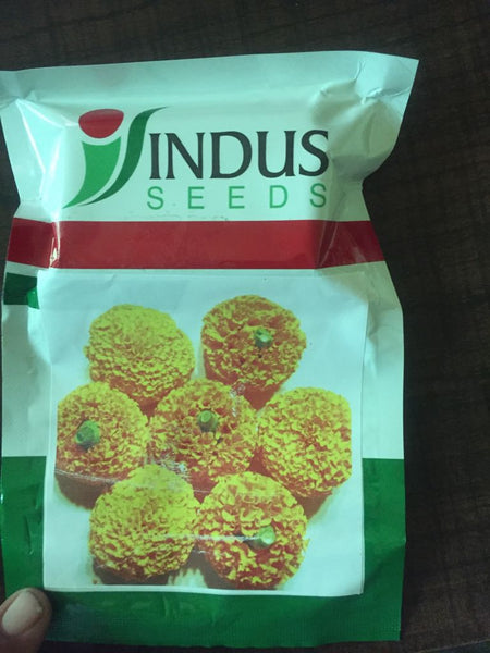 Ashtaganda Orange Marigold (Indus Seeds) - Farmers Stop