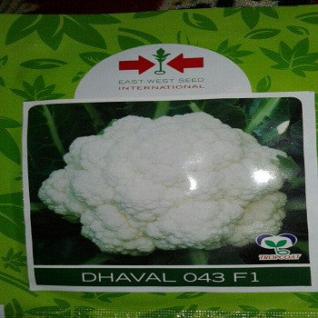 Dhaval/धवल 043 Cauliflower (East West Seed) - Farmers Stop
