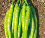 HPH-490 Hot pepper (Syngenta) - Farmers Stop