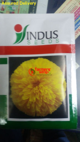 Yellow Moon Beejilee Flower Seeds (Indus Seeds) - Farmers Stop