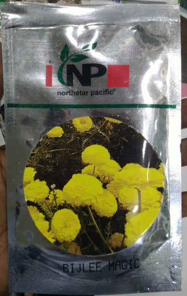 Magic Yellow Bijlee Flower Seeds ( North Star Seeds) - Farmers Stop