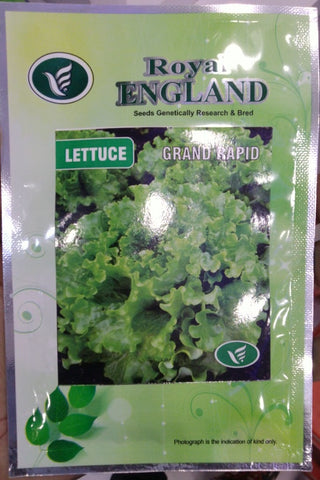 Grand Rapid Lettuce Seeds (Royal England) - Farmers Stop