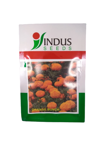 Orange Bunch Kolkata Type Desi Marigold (Indus Seeds)