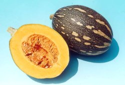 Preeti/प्रीती Winter Squash (Pumpkin) (Known You Seeds) - Farmers Stop