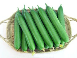 Sania/सानिया Hybrid Cucumber (Known You Seeds) - Farmers Stop