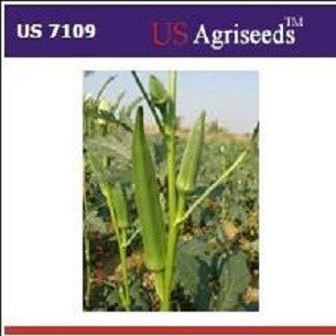 US 7109/यूएस ७१०९ भिंडी/Okra (US Agri Seeds) - Farmers Stop