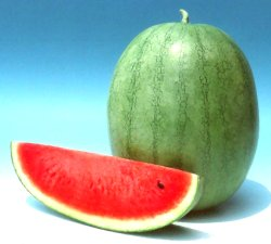 Yamuna/यमुना Hybrid Watermelon (Known You Seeds) - Farmers Stop