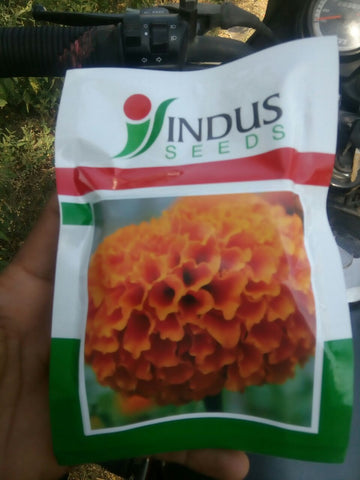 Sweet Orange Marigold (Indus Seeds) - Farmers Stop