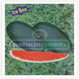 Arun-0035/अरुण -००३५ Ice Box Watermelon (Pahuja) - Farmers Stop