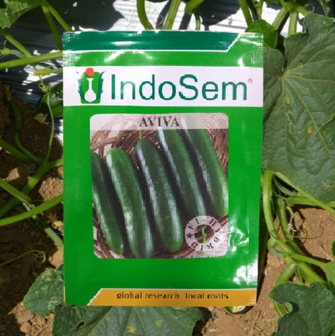 Aviva F1 Hybrid Seedless Cucumber (IndoSem)