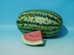 Chirag/चिराग Hybrid Watermelon (Known You Seeds) - Farmers Stop