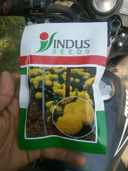 Sweet Yellow Marigold ( Indus Seeds) - Farmers Stop