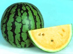 Devyani/देवयानी Hybrid Watermelon Yellow Flesh (Known You Seeds) - Farmers Stop