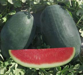 NS 702(NS 34) Icebox Watermelon (Namdhari) - Farmers Stop