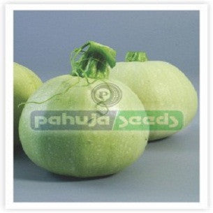 Don-17/डॉन -१७ Summer Squash (Pahuja Seeds) - Farmers Stop