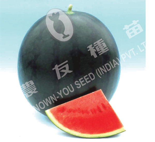 Poonam/पूनम Hybrid watermelon (Known You Seeds) - Farmers Stop