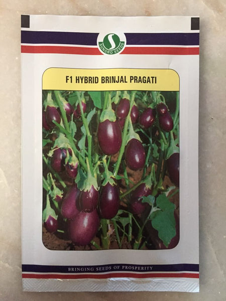 Pragati/प्रगति Hybrid F1 Brinjal (Sungrow Seeds) - Farmers Stop