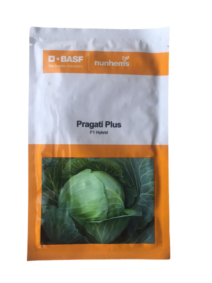 Pragati Plus/प्रगति प्लस F1 Hybrid Cabbage (BASF | Nunhems)