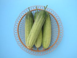 Radhika/राधिका IA012 Hybrid Cucumber (Known You Seeds) - Farmers Stop