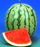 Renuka/रेणुका Hybrid watermelon (Known You Seeds) - Farmers Stop