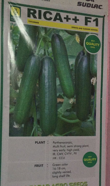 Rica ++ F1 Cucumber Seeds (Yuksel Seeds) - Farmers Stop