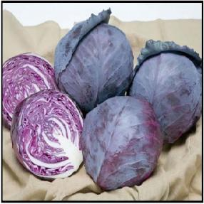 Ruby Ball/रूबी बॉल  F1 Red Cabbage (Takii Seeds) - Farmers Stop