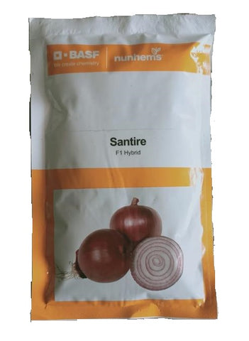 Santire/सैनटायर F1 Hybrid Onion (Nunhems)