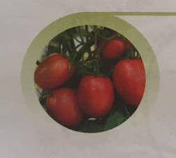 Sarathi/सारथी Tomato (East West Seeds) - Farmers Stop