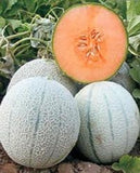 Shikha/शिखा F1 Hybrid Muskmelon (United Genetics India) - Farmers Stop