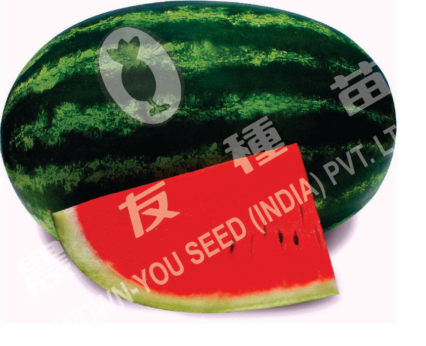 """YUM Dinger 3/"""" 12ct Watermelon Seed for sale online"""