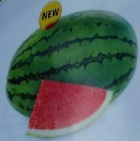 Vasudha/वसुधा Hybrid Watermelon (Known You Seeds) - Farmers Stop