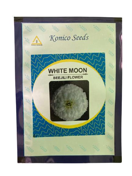 White Moon/वाइट मून Bijeeli Pure White Flower Seeds (Konico Seeds)
