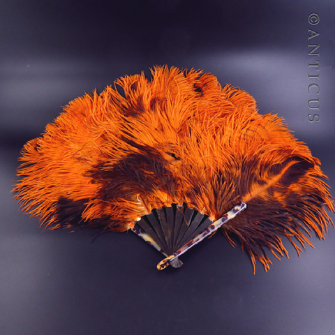 Orange Ostrich Feather Fan, Tortoiseshell Struts.