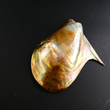 Mussel Blister Pearl on Shell.