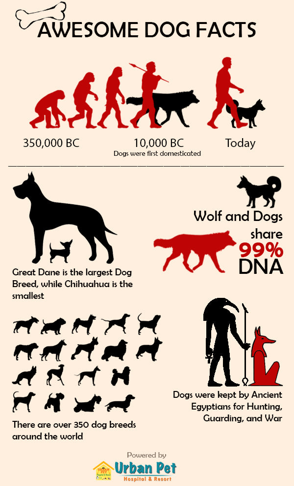 awesome dog facts