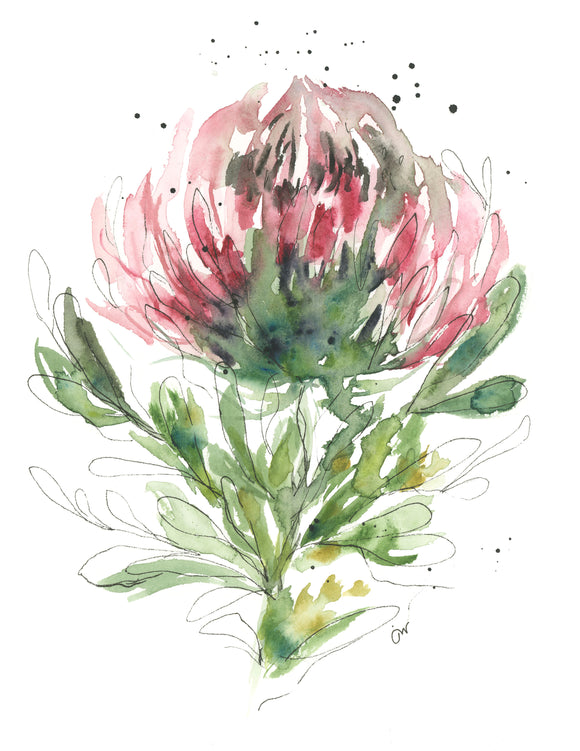 Abstract Protea