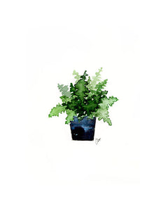 Print - Potted Fern