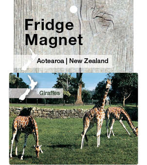 Giraffes at Auckland Zoo - magnet
