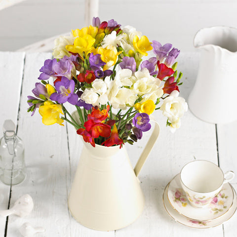 Mixed Freesias