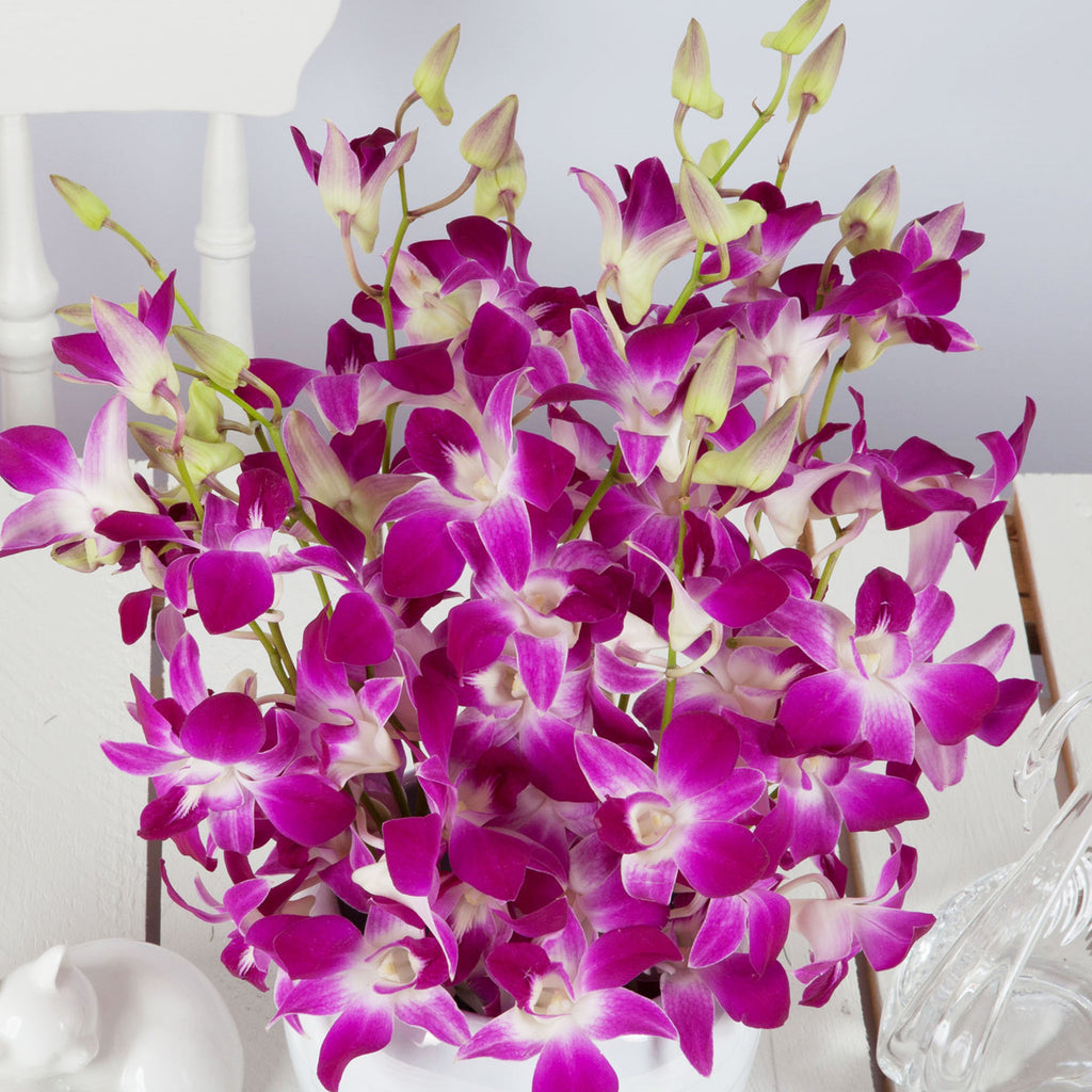 Cheap Dendrobium Orchids Flower Bouquets - Next Day Delivery ...