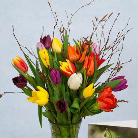 Mixed Tulips for Mum