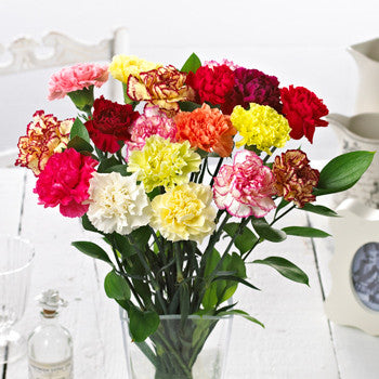 Mixed Carnations