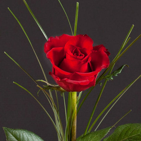 Single Red Valentine Rose