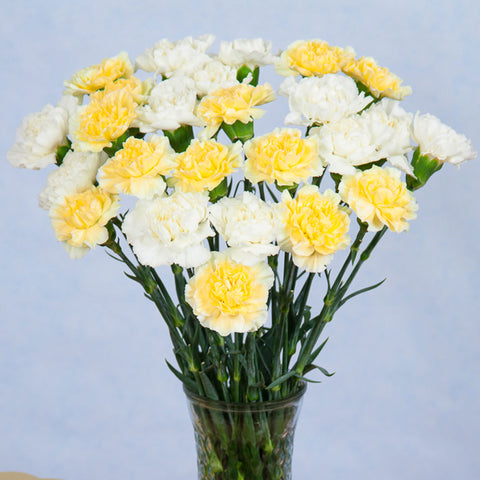 Yellow & White Carnations