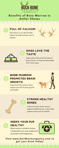 Bone Marrow Benefits for Dogs Infographic