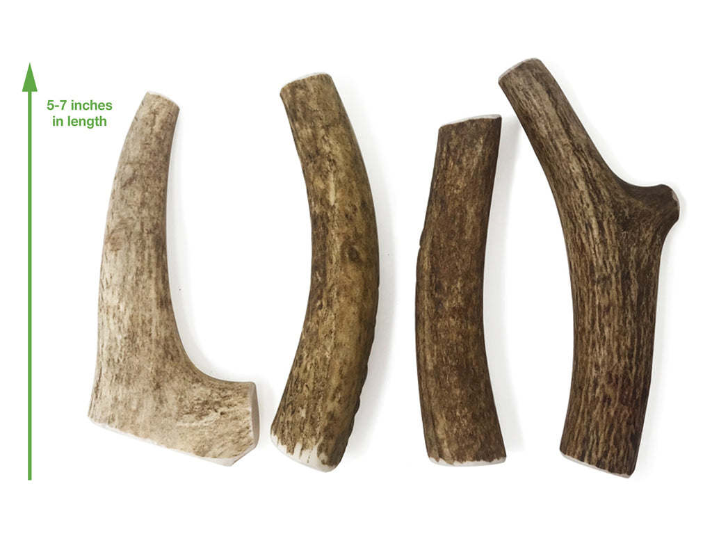 Elk Antler Medium Whole Dog Chews - Double Pack