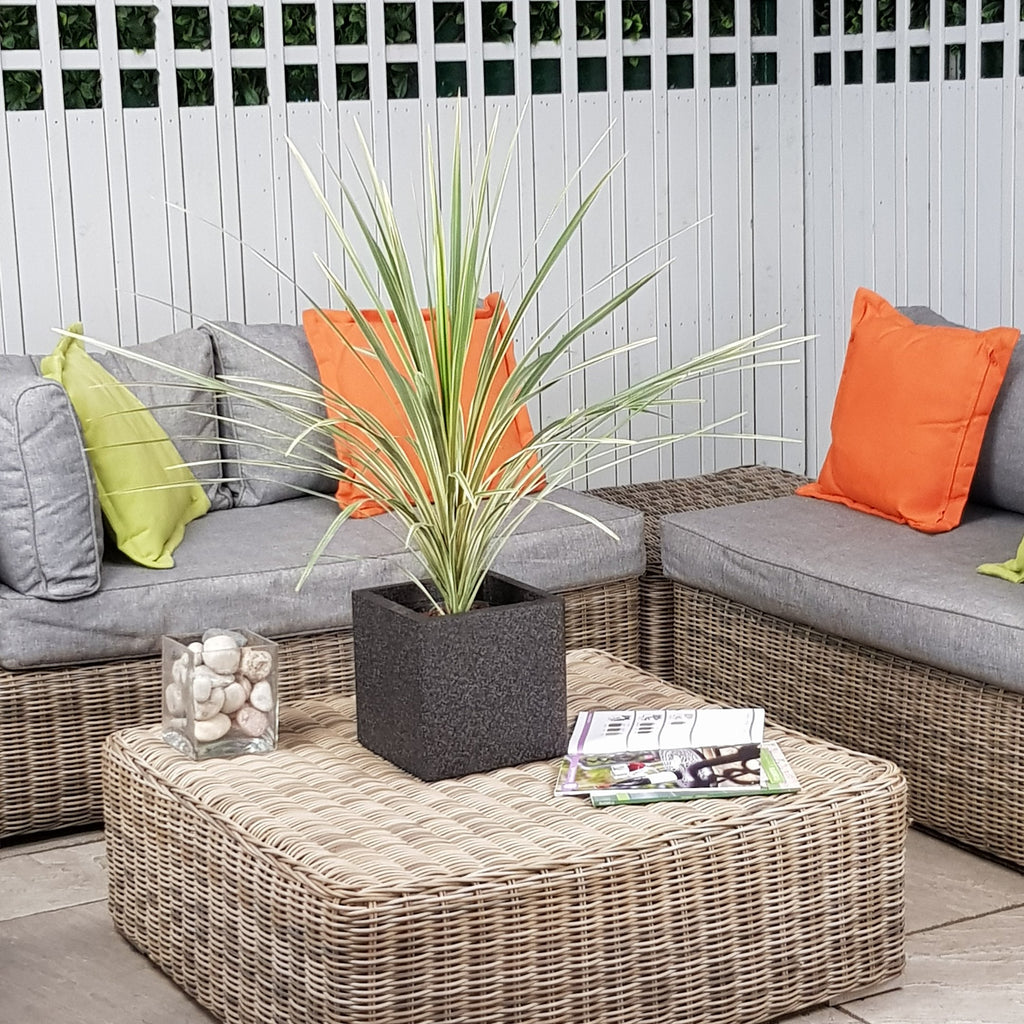 Palm Tree Instant Garden Set Complete As Shown Delivered To Your Door - Tropicana 1 Set